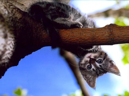 Обои Кошка залезла на дерево и перевернулась вниз головой