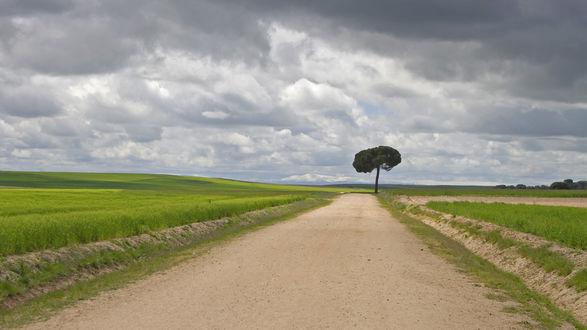 Обои В чистом поле посреди дороги растет странное дерево