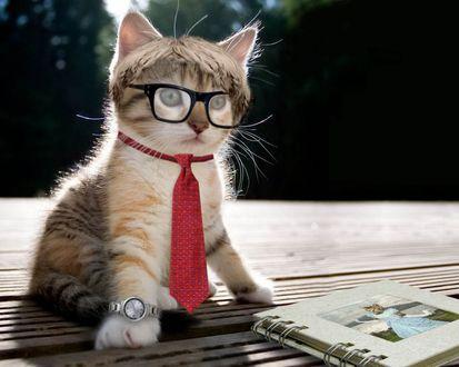 Обои Кошка в очках, галстуке и при часах смотрит альбом с фотографиями