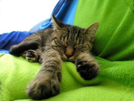 Обои Кот спит на зеленой подстилке