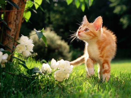 Обои Котёнок в саду