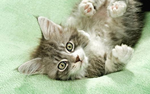 Обои Котёнок лежит на полотенце