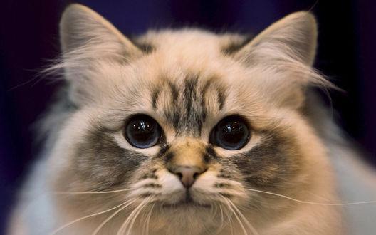 Обои Мордашка симпатичного кота