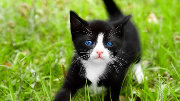 Обои Чёрно-белый котик на травке
