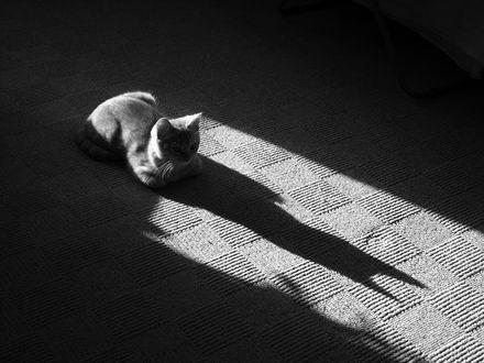 Обои Кот, сидящий на ковре, и его тень
