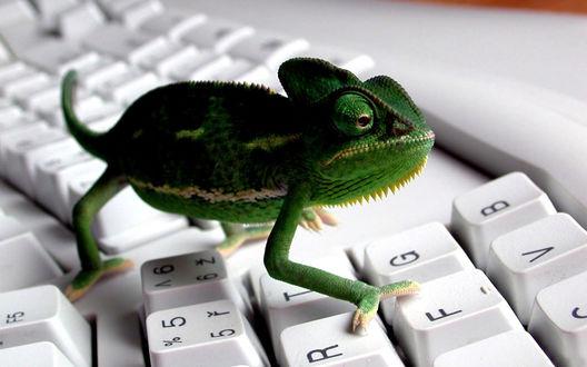 Обои Хамелеон на клавиатуре