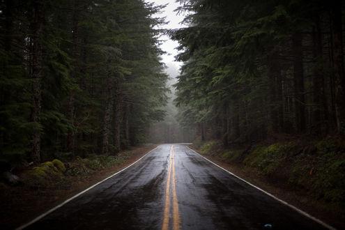 Обои Дорога после дождя проходящая сквозь лес