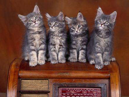 Обои 4 серых котенка сидят на старом радиоприемнике (Philco)