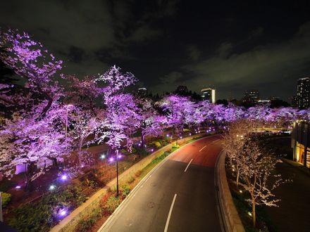 Обои Из-за городской подсветки деревья кажутся лиловыми