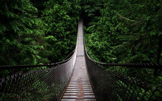 Обои Деревянный подвесной мост