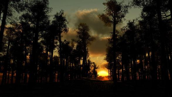 Обои Закат в лесу