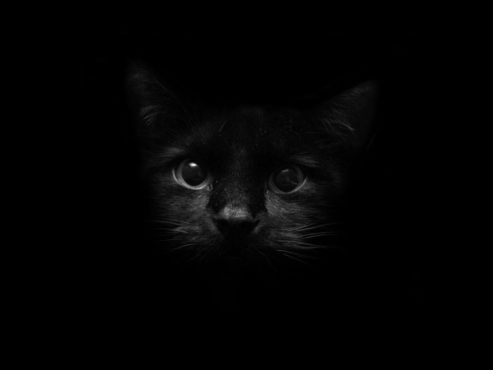 Черные коты обои на рабочий стол