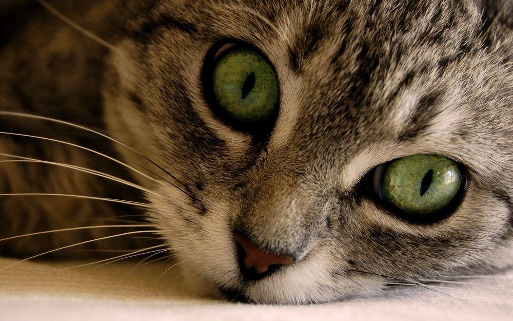 Маленький кот с большими глазами