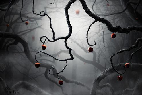 Обои Одинокие яблоки на кривых черных ветвях