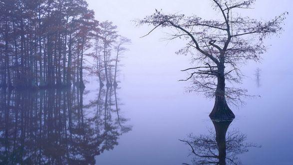 Обои Затопленный лес в тумане