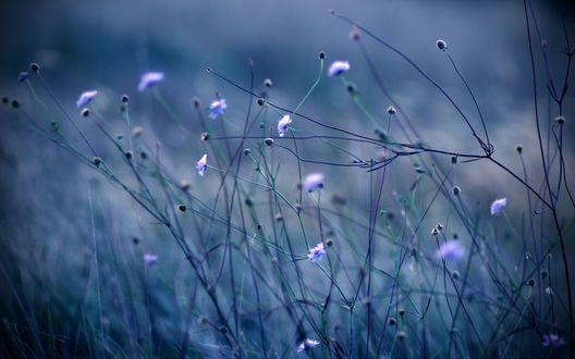 Обои Красивые сиреневые цветочки
