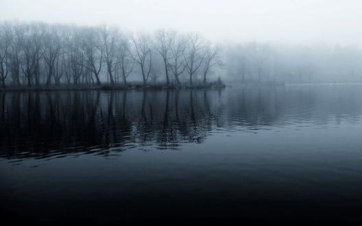 Обои Туман накрыл лес