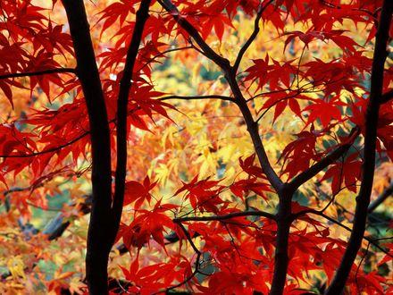 Обои Деревья в осенних листьях