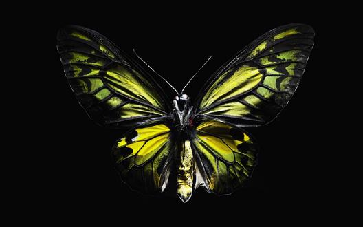 Обои Красивая бабочка