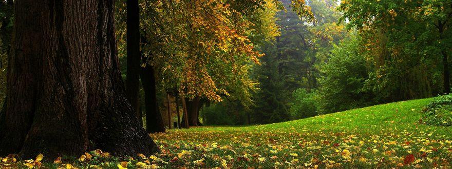 Обои Поляна в осеннем парке