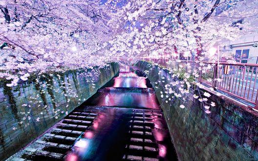 Обои Красивый проток с освещением и цветением сакуры