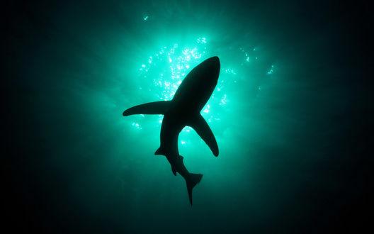 Обои Акула в тёмном море