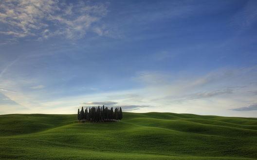 Обои На голых зеленых холмах выросло несколько деревьев