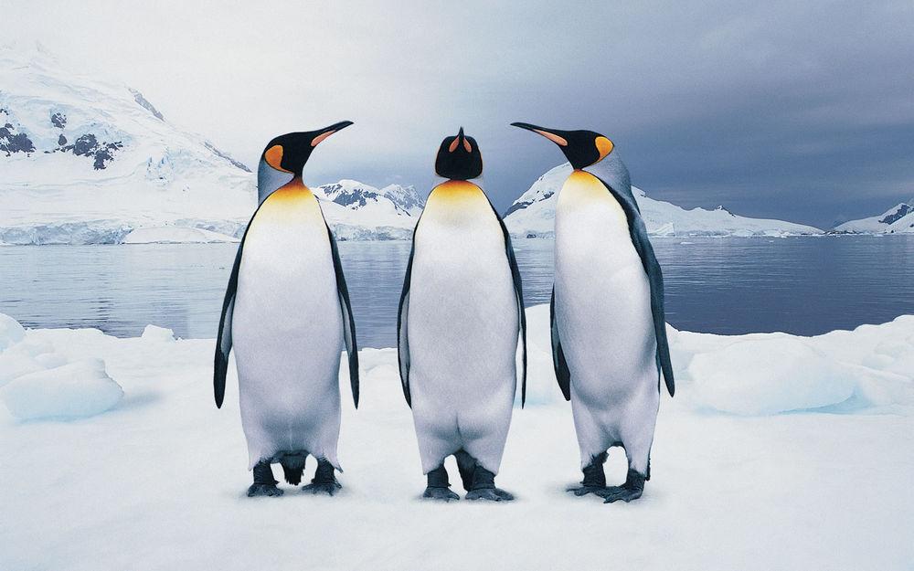 Почему пингвинов нет на северном полюсе Если можно