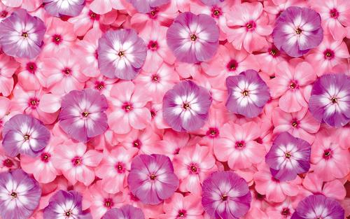 текстуры цветов: