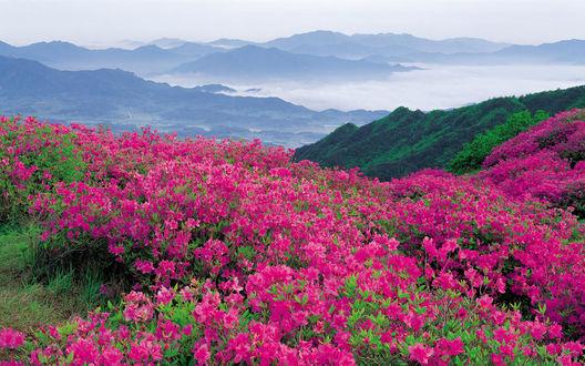 Обои Фиолетовые цветы на склоне холма