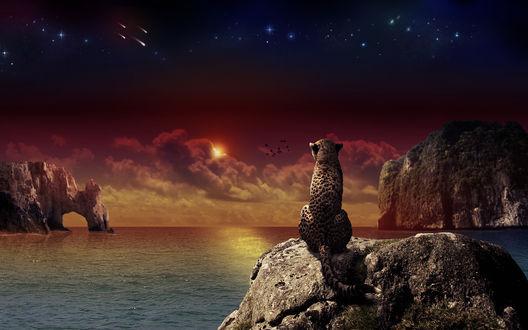 Обои Леопард смотрит на закат