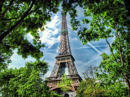 Обои Эйфелева башня из-за деревьев