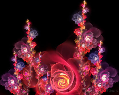 Обои Розы (flowerings)