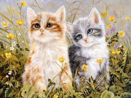 Обои Котята в траве