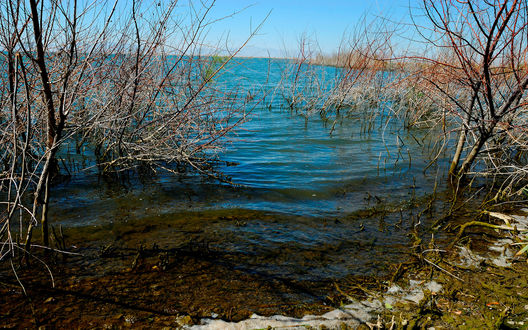 Обои Берег реки после зимы