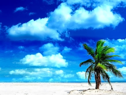 Обои Одинокая пальма на пляже