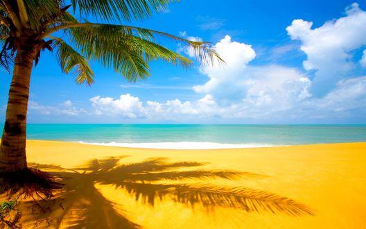 Обои Пальма. Жёлтый песок на пляже.