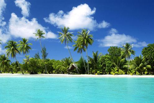 Обои Морской берег и пальмы