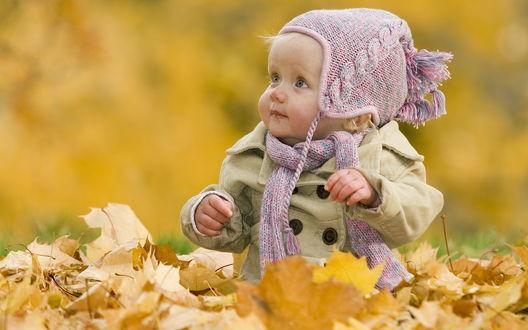 Обои Маленькая девочка сидит в жёлтых листьях