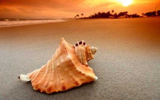 Обои Ракушка на берегу моря
