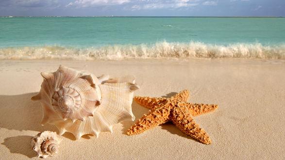 Обои Красивые ракушки и морская звезда на берегу