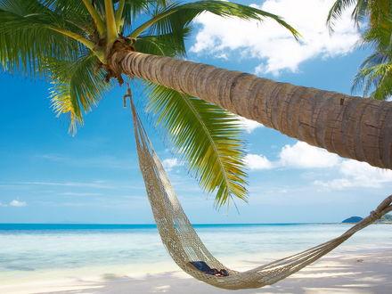 Обои Пляж. Гамак на пальме