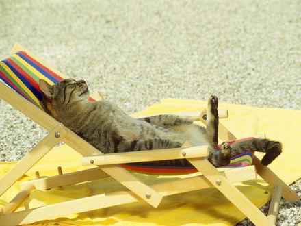 Обои Кот загорает на раскладном шезлонге на пляже