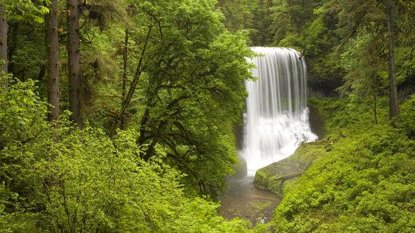 Обои Водопад в лесу