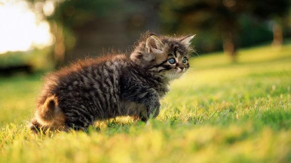 Обои трусливый кот на травке