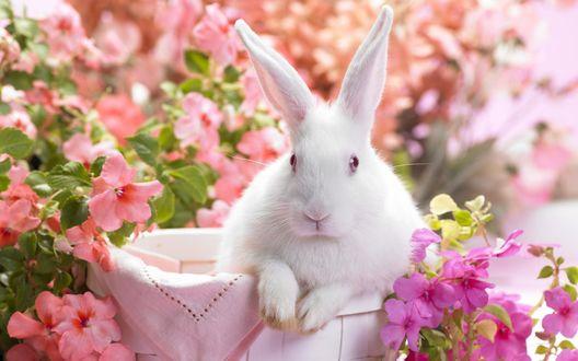 Обои Кролик среди розовых вьюнков