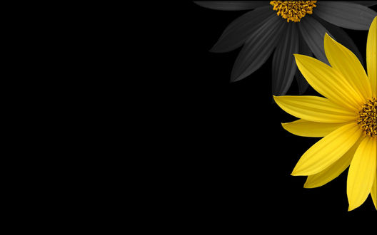 Обои Желтый и черный цветы