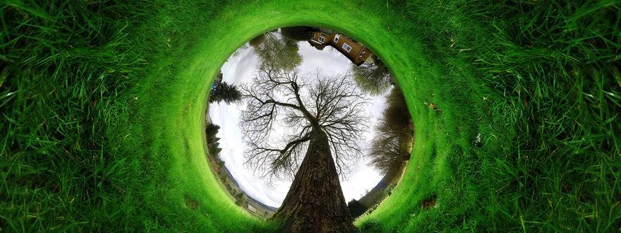 Обои Круговая панорама дом и дерево