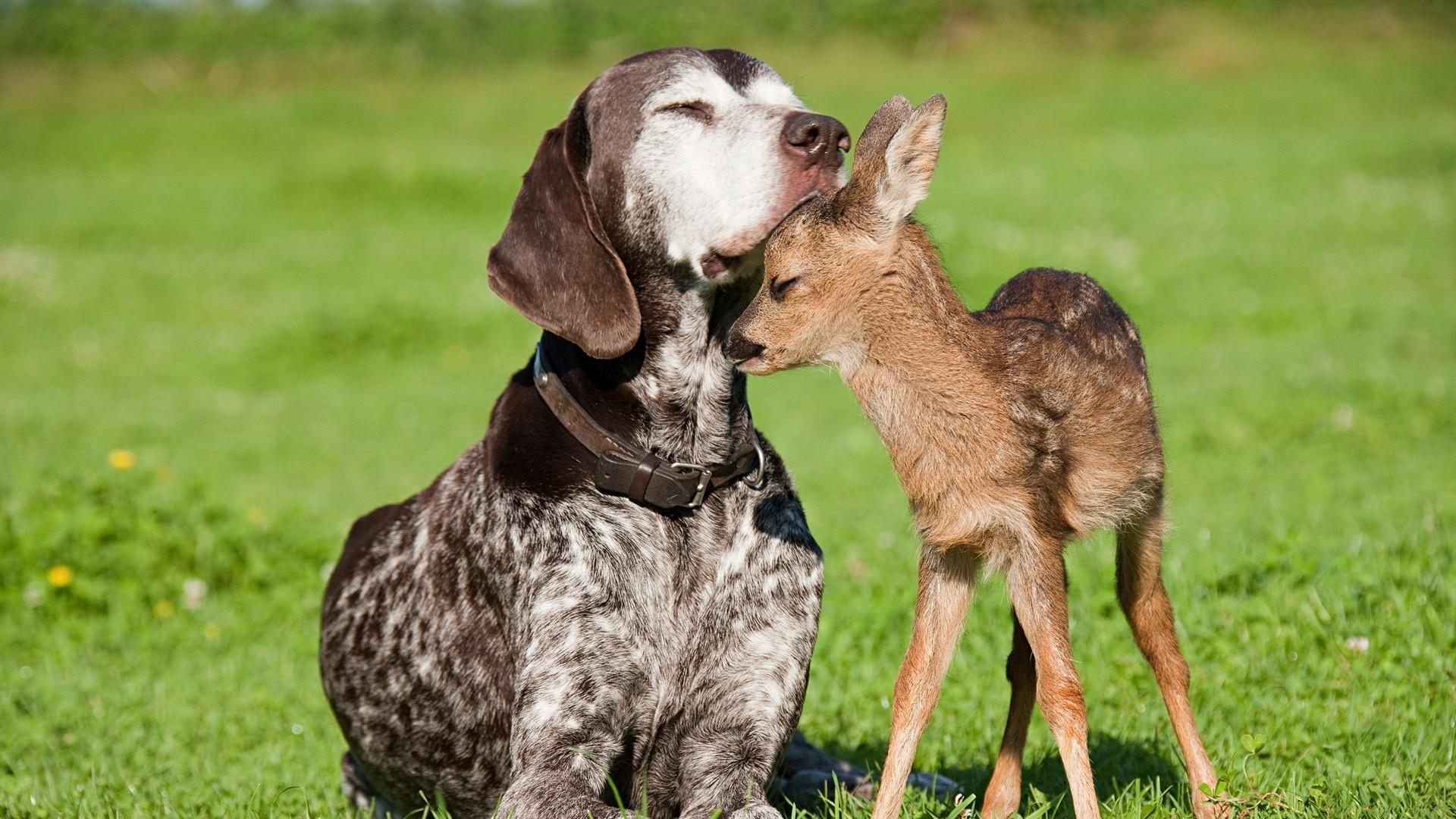 3d Amitié Wallpaper entre un chien et un chien cerfs wallpaper