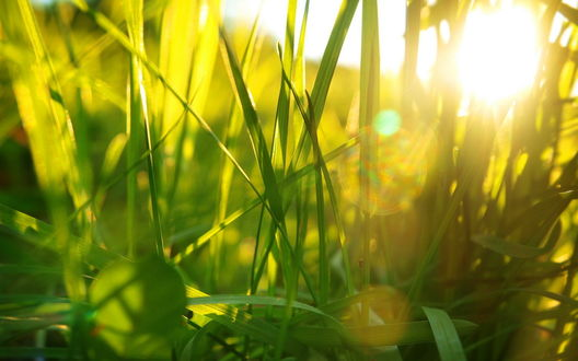 Обои Солнце сквозь траву